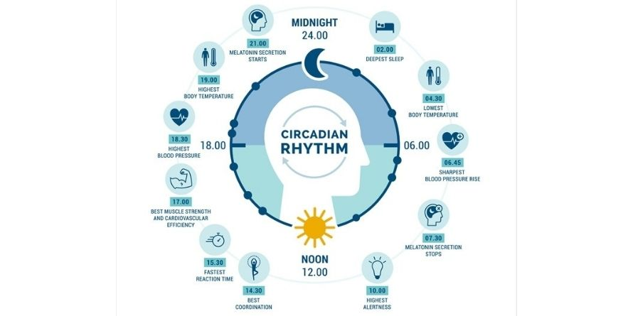 Your Circadian Clock and Weight Control